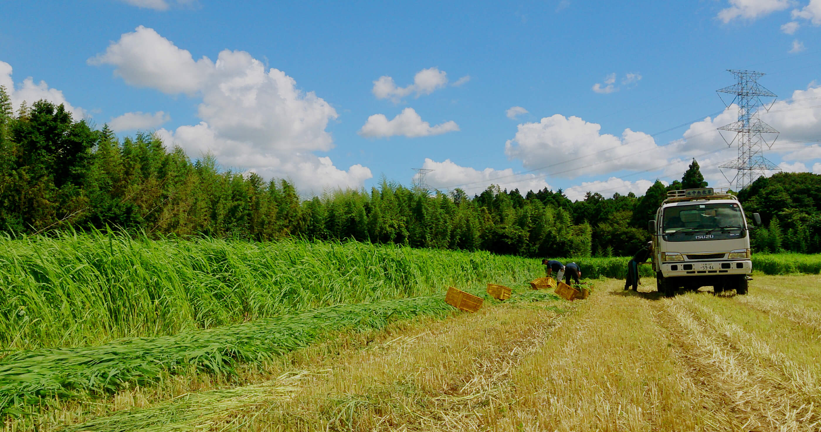 全国の動物たちの健康と幸せのため中央牧草センターが生まれ変わりました